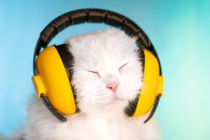Portrait of fluffy cat in headphones on blue background